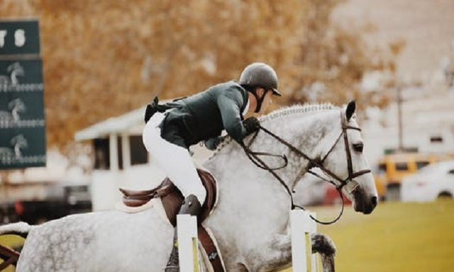 Häst och ryttare på hopptävling